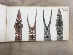 Drawing of objects collected by Alfred Cort Haddon in the Torres Straits, Cambridge University Archives